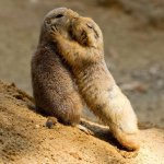 Help Us Move the Lemay Prairie Dogs Before the Bulldozers Come! User Avatar