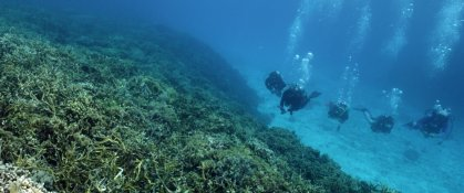 Crowdfunding - <strong>Restore Coral Reefs at RIMS</strong>