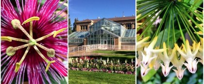 Crowdfunding - Williams Conservatory Support Campaign