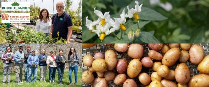 Crowdfunding - Conservation & Research on the Four Corners Potato