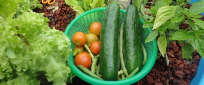 Crowdfunding - Operation: End Hunger with Aquaponics!